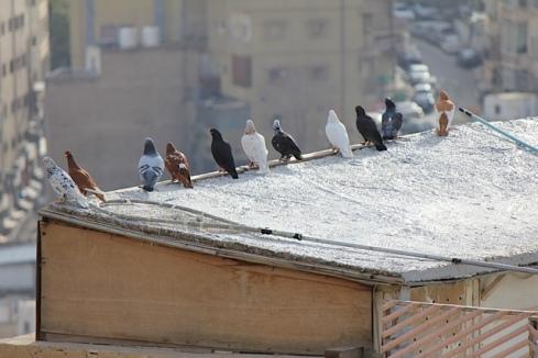 Jordan birds